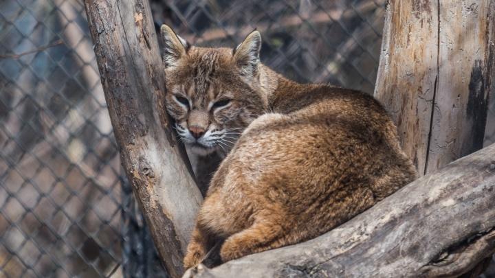 В Новосибирском зоопарке возродят детский зоопарк