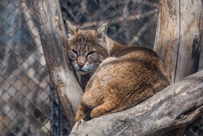 В Новосибирском зоопарке детям покажут «привлекательных» животных