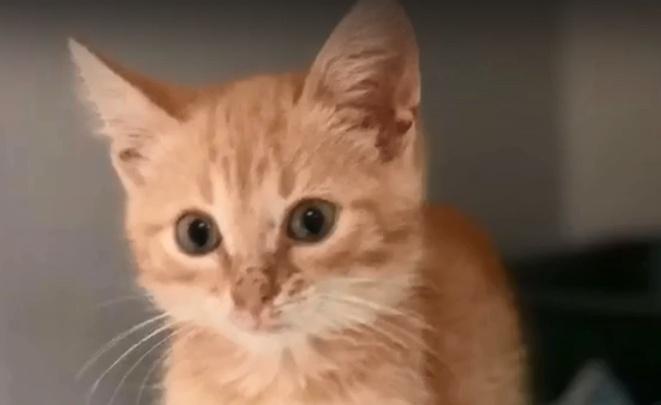 Волгоградка спасла от гибели на кладбище маленького котёнка