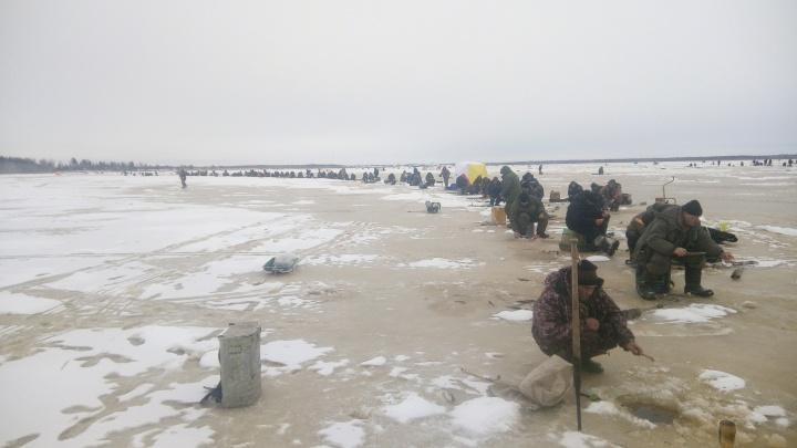Навага «долбит как шальная»: в деревне Луде на льду выстроилась огромная очередь из рыбаков