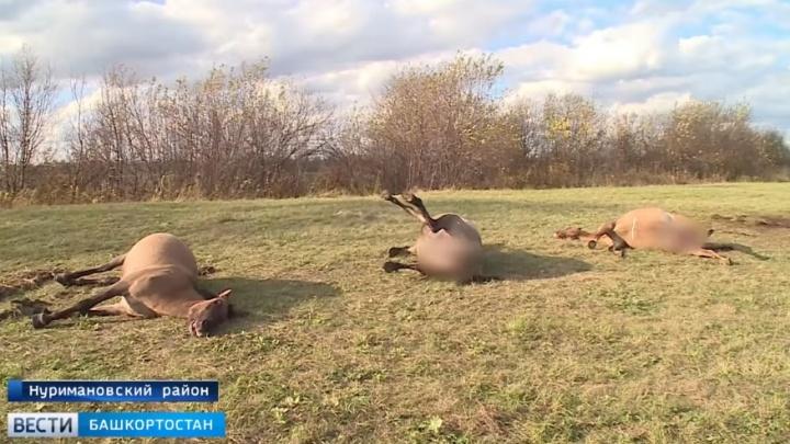 Ущерб на миллион рублей: в Башкирии расстреляли табун лошадей