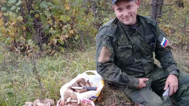 Грибы пошли! Жители Ярославской области хвастаются лесным урожаем: фото
