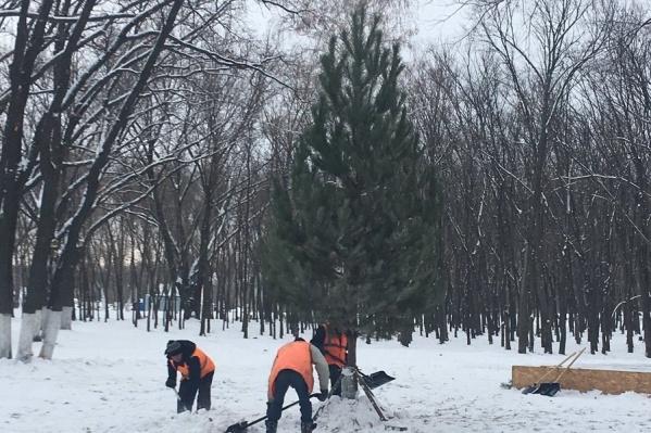 В парках города устанавливают живые ёлки