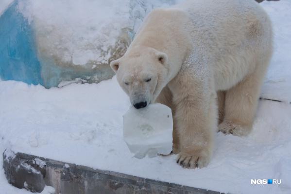 Белые медведи любят играть с канистрами и дорожными конусами