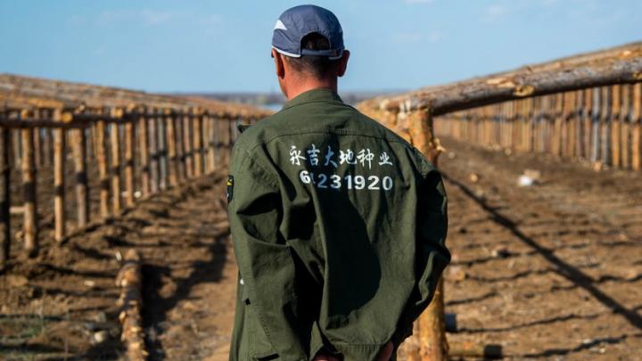Волгоградская полиция перестала выдавать китайцам разрешения на работу