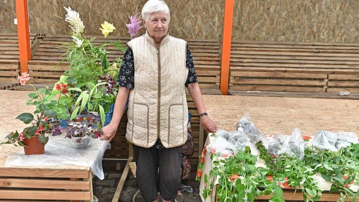 Ярославские чиновники снова прогнали бабушек и дедушек, продающих ягоды и овощи с огорода