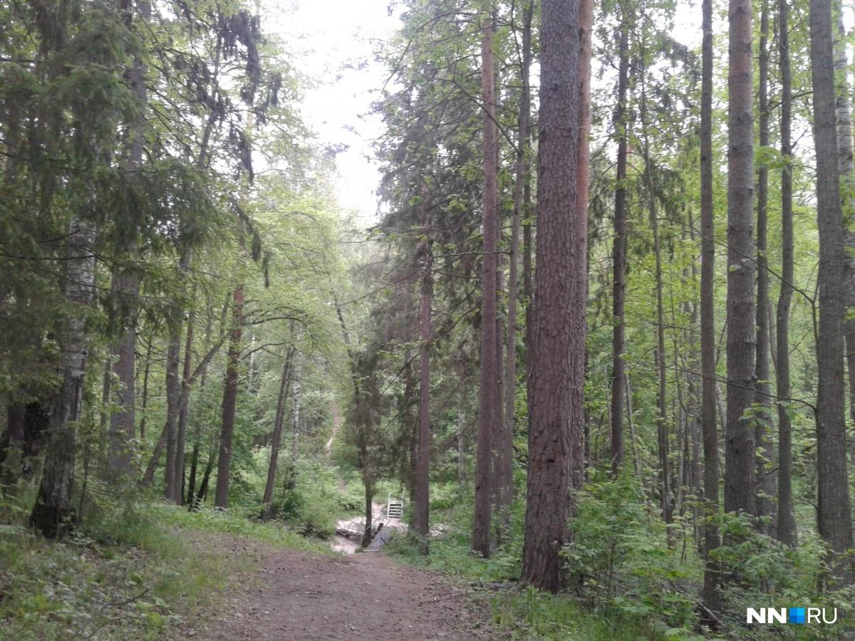 Спуск к ручью, откуда Серафим Саровский приносил воду, когда жил на Дальней пустыньке.
