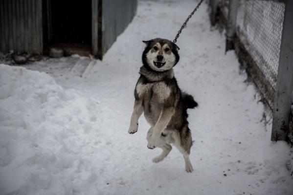 В пункте временного содержания Центра по проблемам домашних животных