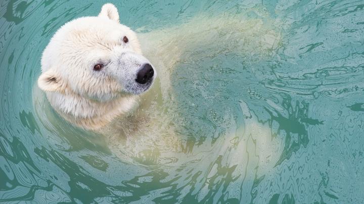 Впервые за историю зоопарка купальный сезон у медведей продлился до ноября
