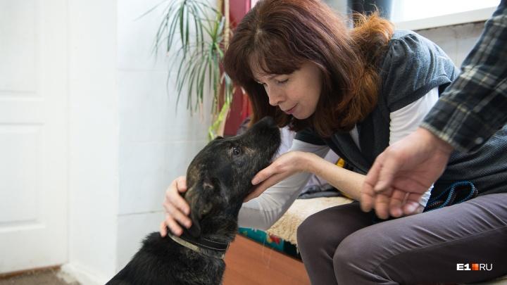 Бездомный пес из екатеринбургского приюта нашел хозяев в Финляндии