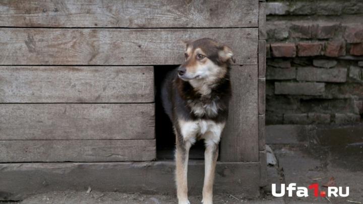 В Башкирии пострадавшая от укуса собаки женщина получит 50 тысяч рублей