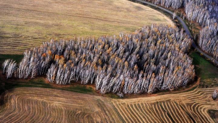 300 метров над уровнем Омска: фото города с высоты птичьего полёта