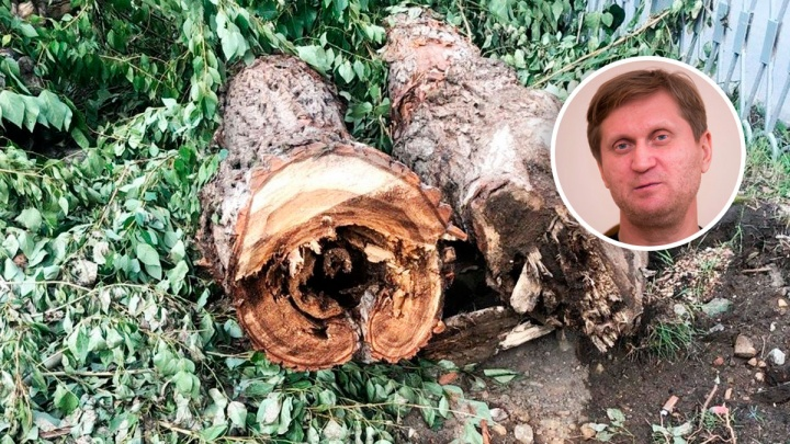 «Уральский пельмень» Андрей Рожков поддержал вырубку деревьев в сквере на Химмаше