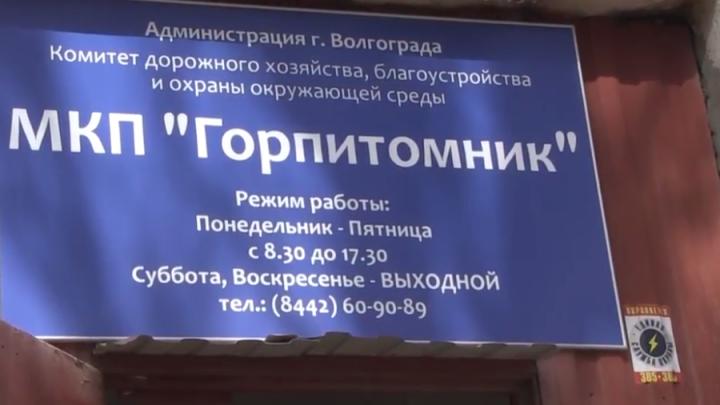 Бывший директор волгоградского «Горпитомника» идет под суд за собачьи «мертвые души»