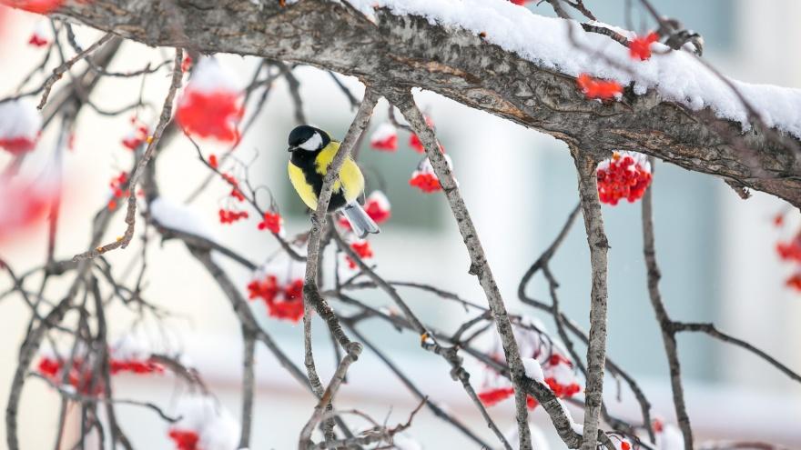 На Красноярск надвигается серьезное похолодание