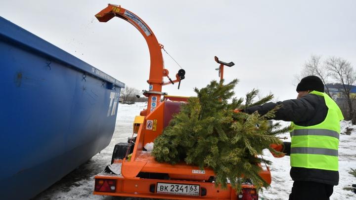 Щепки летят: в Самарской области начали переработку новогодних деревьев