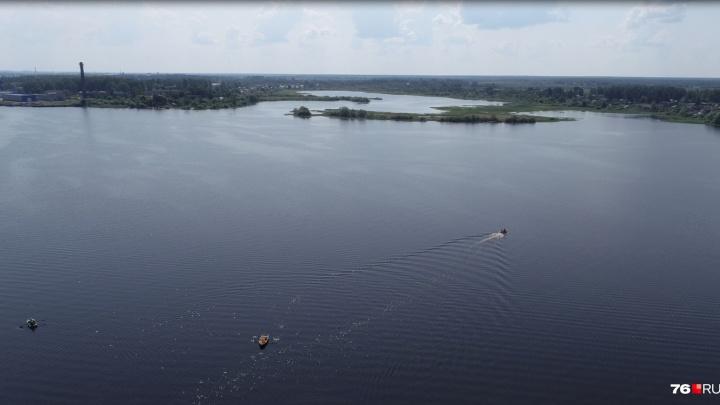 «Погибнут растения и животные»: рассказали об угрозах строительства ЦБК на Рыбинском водохранилище