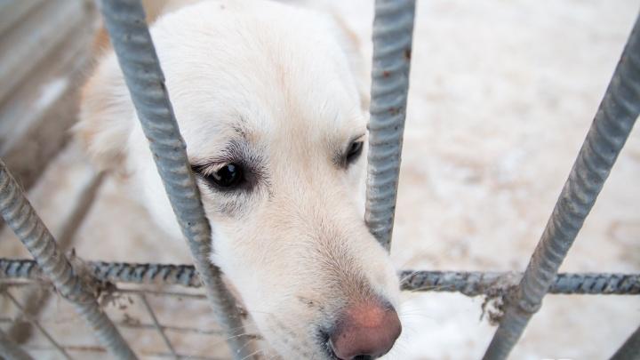 Самарцы согласовали строительство приюта для бездомных животных на Утевской