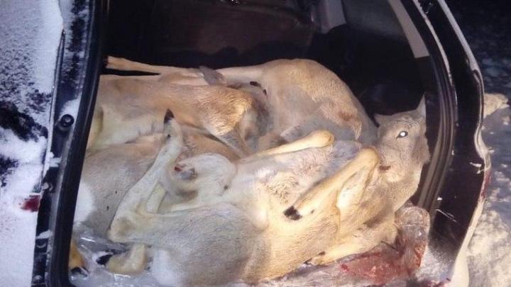 Дело VIP-браконьеров, застреливших беременных косуль, передают в суд. В числе обвиняемых — тюменец