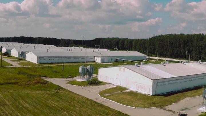 На птицефабрику под Челябинском завели дела за экологические нарушения
