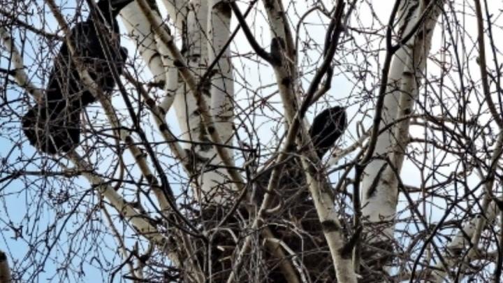 Фото дня. В Нижегородскую область прилетели вестники весны