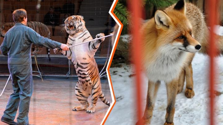 Обречен или спасен? Главы цирка и зоопарка рассказали, где у редких животных выше шанс выжить