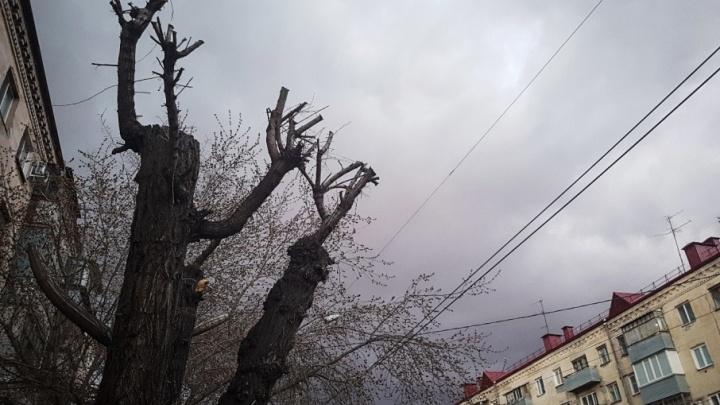 Роман Сергеечев об озеленении Кургана: после зимы 70% деревьев приходится менять из-за автолюбителей