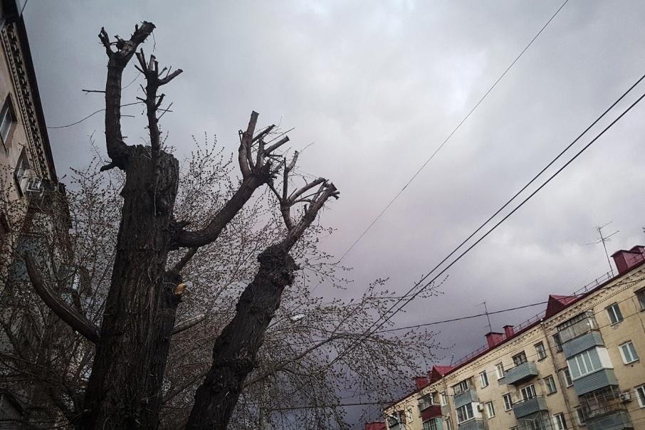 После зимы около 70% молодых деревьев снова нужно менять — сбивают автомобилисты или ломают горожане