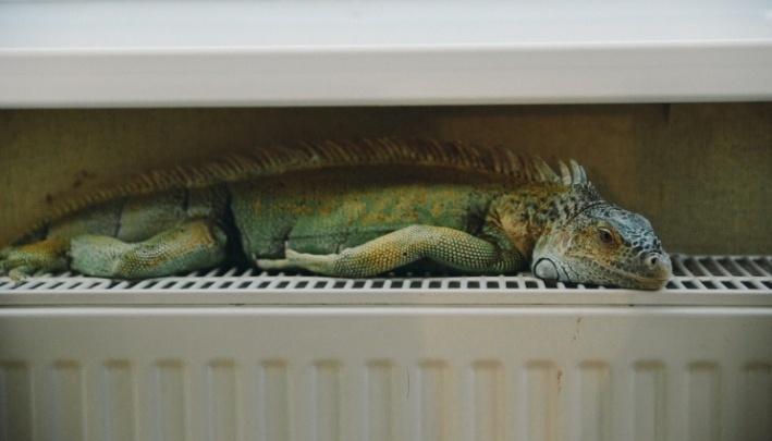 Теплая зима обернулась тропической жарой в квартирах тюменцев. Удастся ли сэкономить на отоплении?