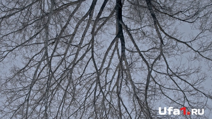 Погода на 17 ноября: дороги Башкирии окутает туман