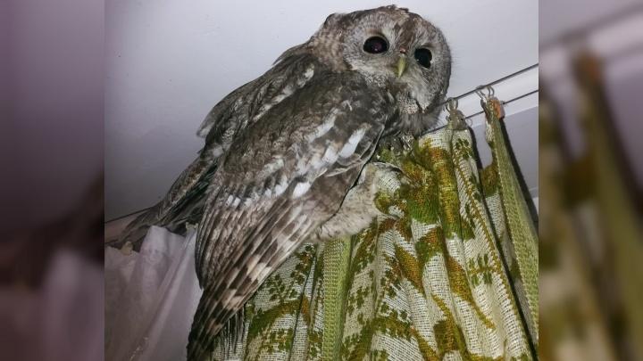 Это приглашение в Хогвартс: в квартиру жителя Брагино залетела сова