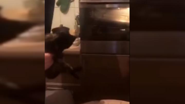 «Это шутка, он живой:»подростки закинули котёнка в духовку и сняли всё на видео