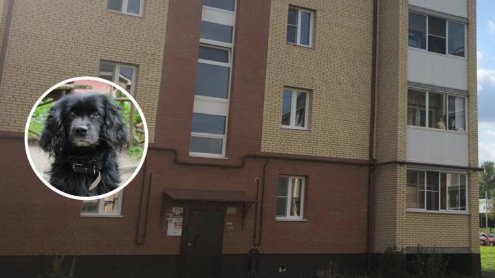 Наложили восемь швов: в Ярославле собака вцепилась в голову двухлетней девочке
