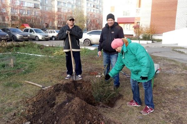 Саженцы получили организации, собиравшие макулатуру для озеленения жилого массива