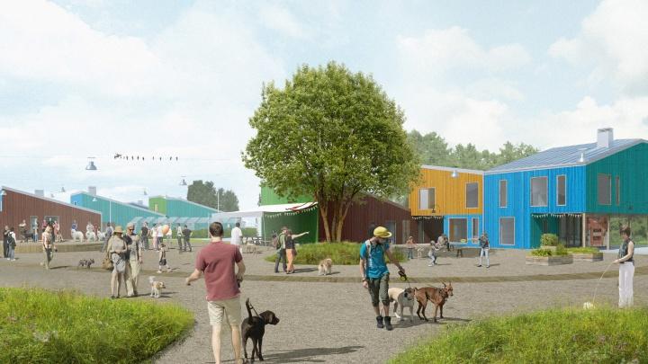 Ярославские архитекторы придумали город для бездомных собак: рассматриваем проект