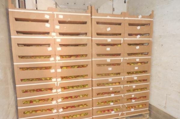 Яблоки из Киргизии отправили на родину
