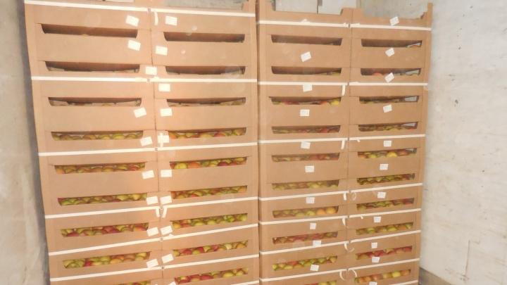 Четыре тонны яблок вернули за границу из Курганской области