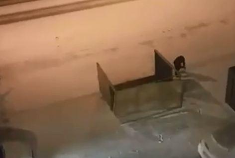 Ночной ветер обрушил недавно установленную остановку в Покровке