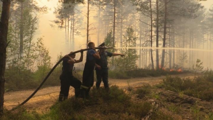 Пятый класс опасности: МЧС экстренно предупреждает о лесных пожарах