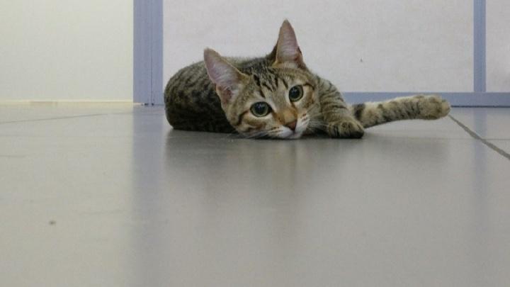 Котам нельзя: екатеринбургские коммунальщики раскритиковали идею открыть подвалы для бездомных животных
