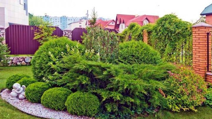 Чудеса на газоне и не только: в Новосибирске пройдут курсы по ландшафтному дизайну