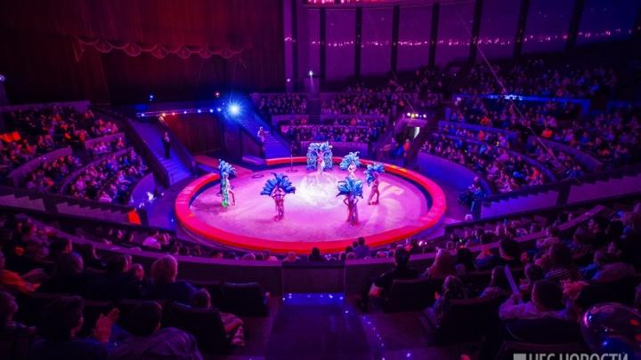 Фабрика клоунов: в Новосибирске откроется цирковая школа для детей