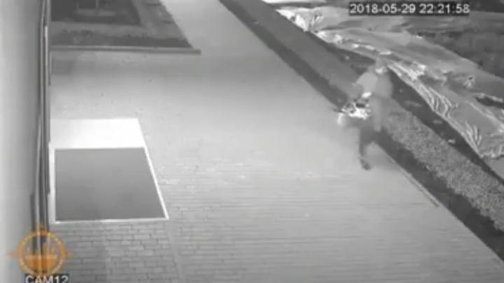 Предприимчивая женщина своровала с клумбы рассаду для дачи и попала на видео