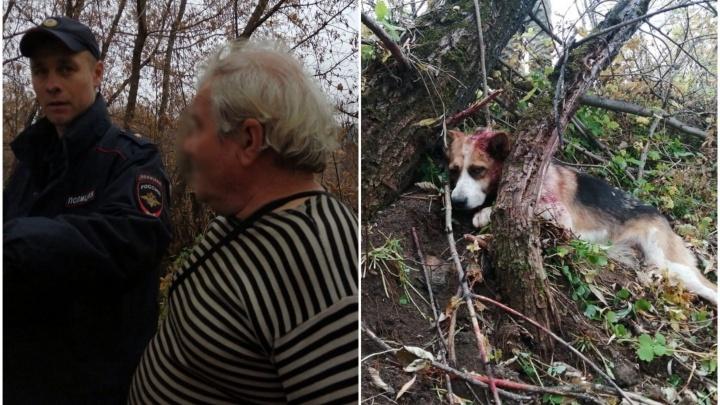 Избиение длилось около часа: в Уфе спасли измученных живодером собак из Челябинской области
