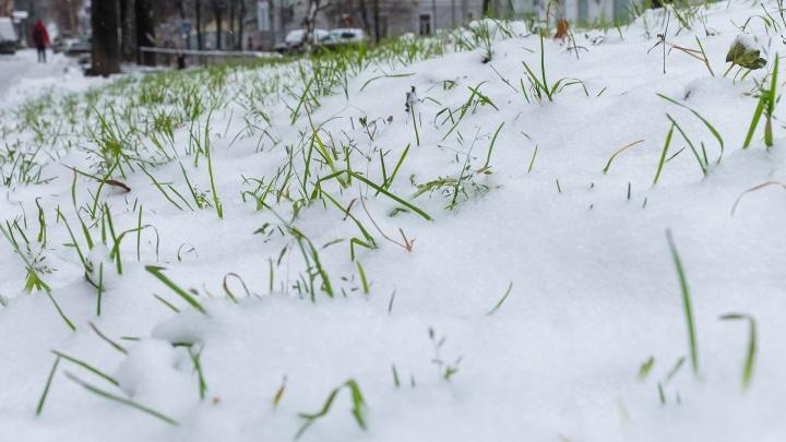 Если хочешь косить — коси. Мэр Березников прокомментировал решение убирать траву под снегом