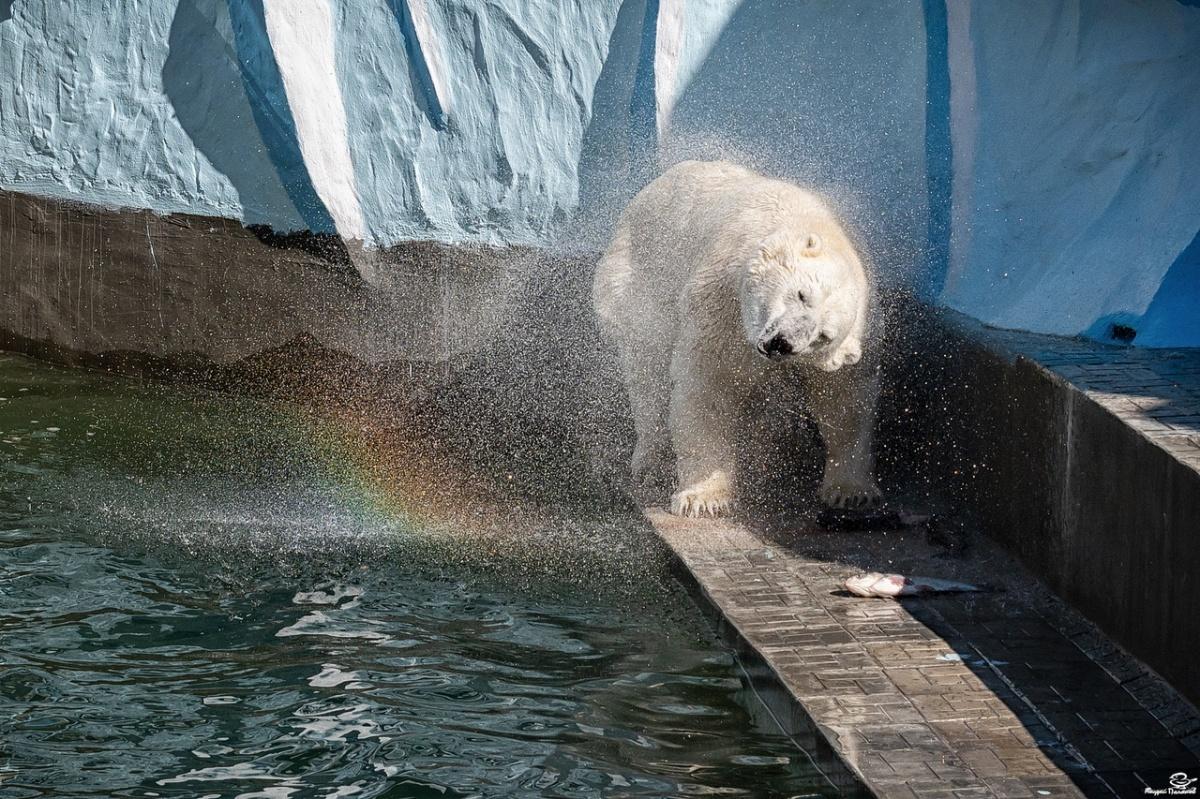 Фотограф Андрей Поляков сделал красивые кадры с медведем Каем накануне