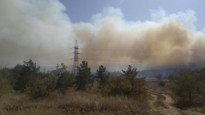 «Сосновый бор» укрыт дымом: в Волгограде ветер раздувает крупный пожар