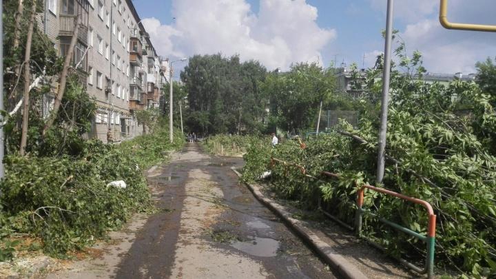 «Был шикарный зелёный двор, а теперь — зона»: во дворе на Шейнкмана вырубили яблони и берёзы