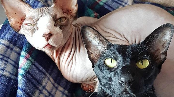 Покажи свой «Инстаграм»: рассматриваем аккаунты омских котов без шерсти и красноухих черепах