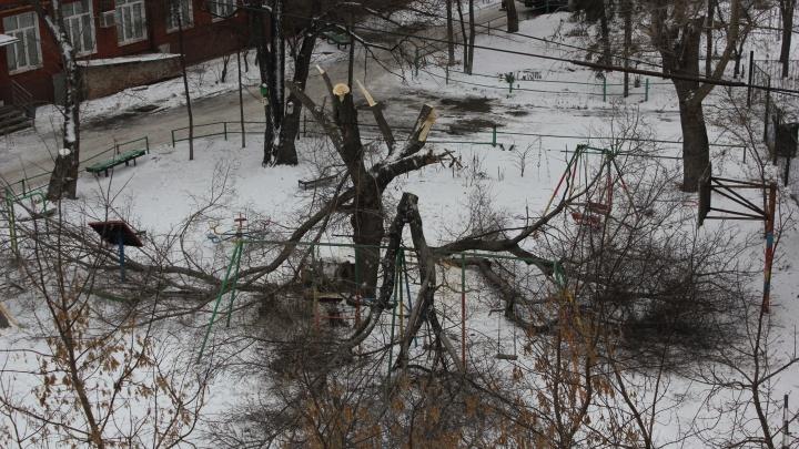 Жилец дома в центре Омска сам кронировал дерево и сломал грибок на детской площадке